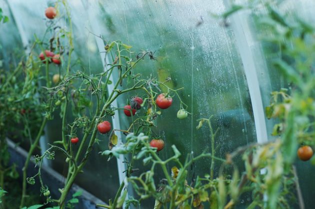 The Ultimate Guide to the Best Portable Greenhouses