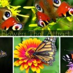 What Kind of Flowers Do Butterflies Like? And How To  Design A Butterfly Garden.