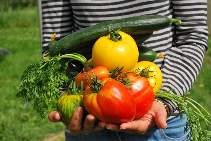How to Find the Best Fertilizer for Vegetable Gardens