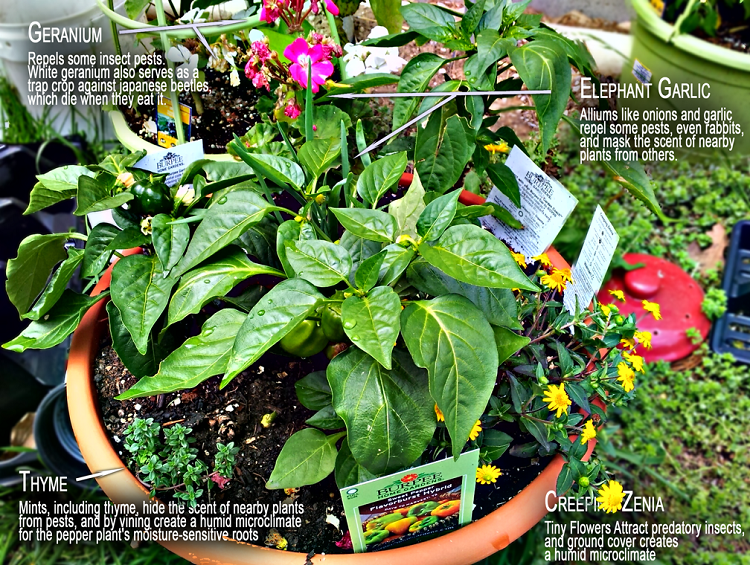 Companion Planting Charts for Vegetables & Fruit-Best of the Web