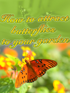 How to attract butterflies ebook