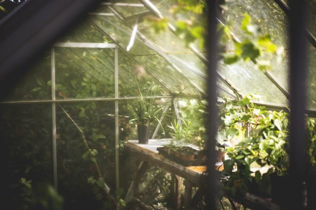 Hobby Greenhouse Reviews: Valuable Facts and Data You'll Need to Know