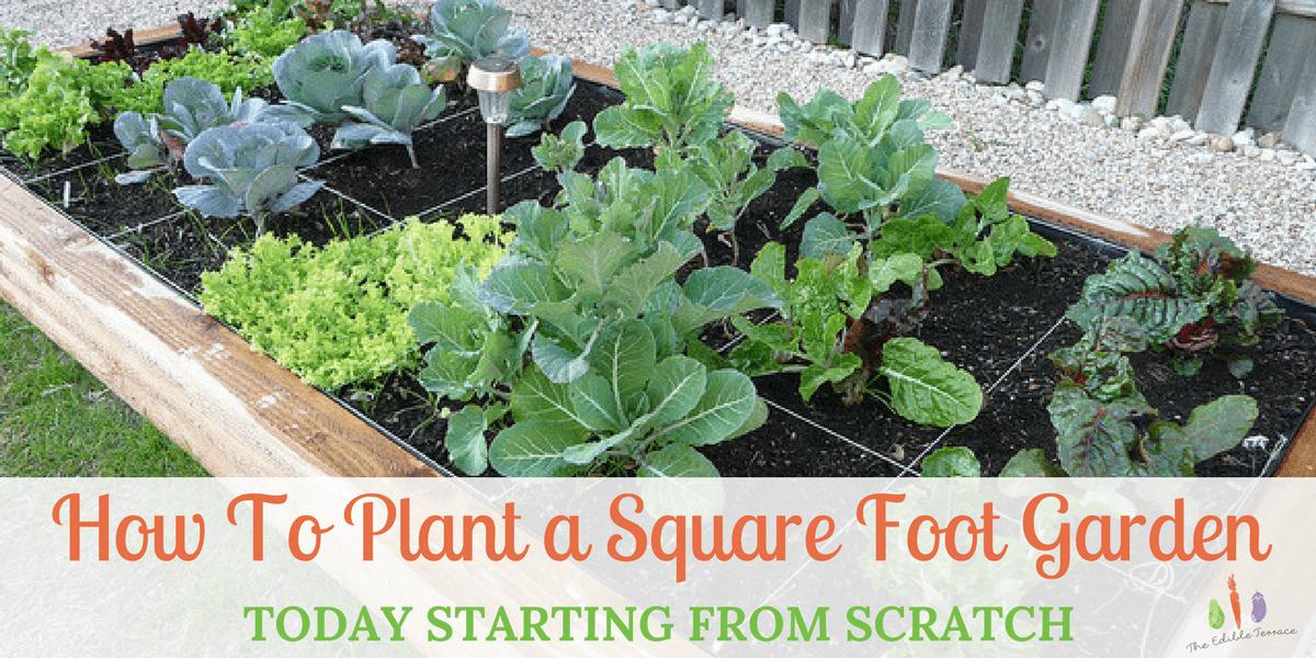 Plant square foot garden