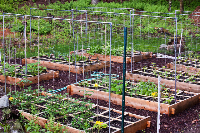 4 Ideas that Will Make You Better at Square Foot Gardening