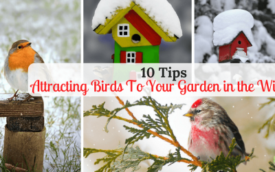 10 Tips For Attracting Birds in Winter To Your Garden
