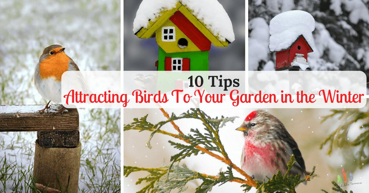 10 Tips For Attracting Birds in Winter To Your Garden