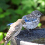 21 Quick Tips on How To Get Birds In Your Yard