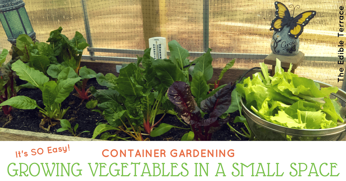 Growing Vegetables In A Small Space