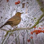 Helping Birds Survive A Cold Winter