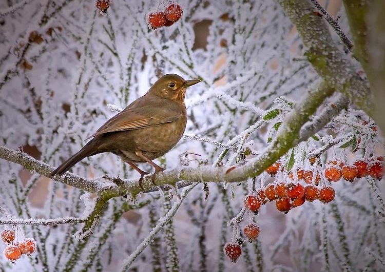 feed wild birds winter