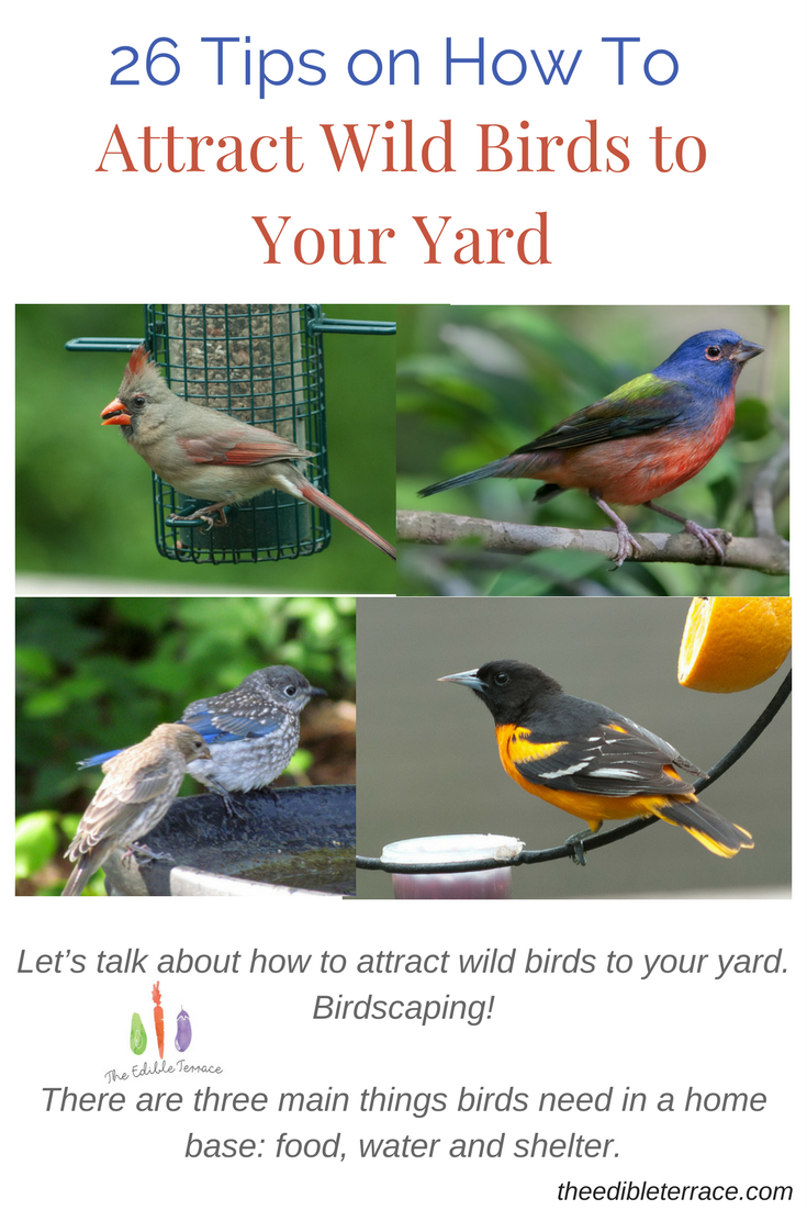 There are three main things birds need in a home base: food, water and shelter. And because it is spring, they also need good nesting sites. So, what can you do to encourage them to come to your backyard and create a home for their future family?