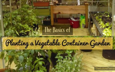 Easy Steps To Growing Vegetables In A Small Space – Container Gardening