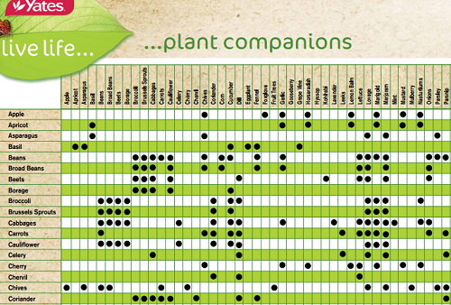 Companion Planting Charts for Vegetables & Fruit-Best of ...