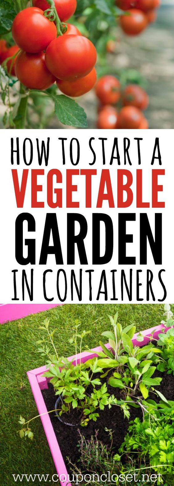 10 Pinteresting People Teach Us How To Grow a Vegetable Garden – When Do You Start Planting a Garden