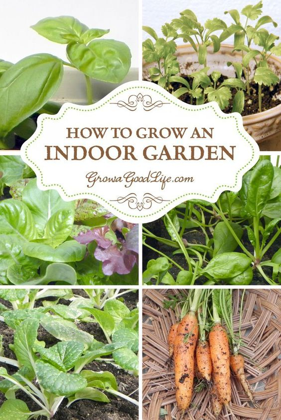 10 pinteresting people teach us how to grow a vegetable garden for Indoor gardening during winter