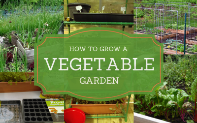 10 Pinteresting People Give Us Steps To Grow a Vegetable Garden