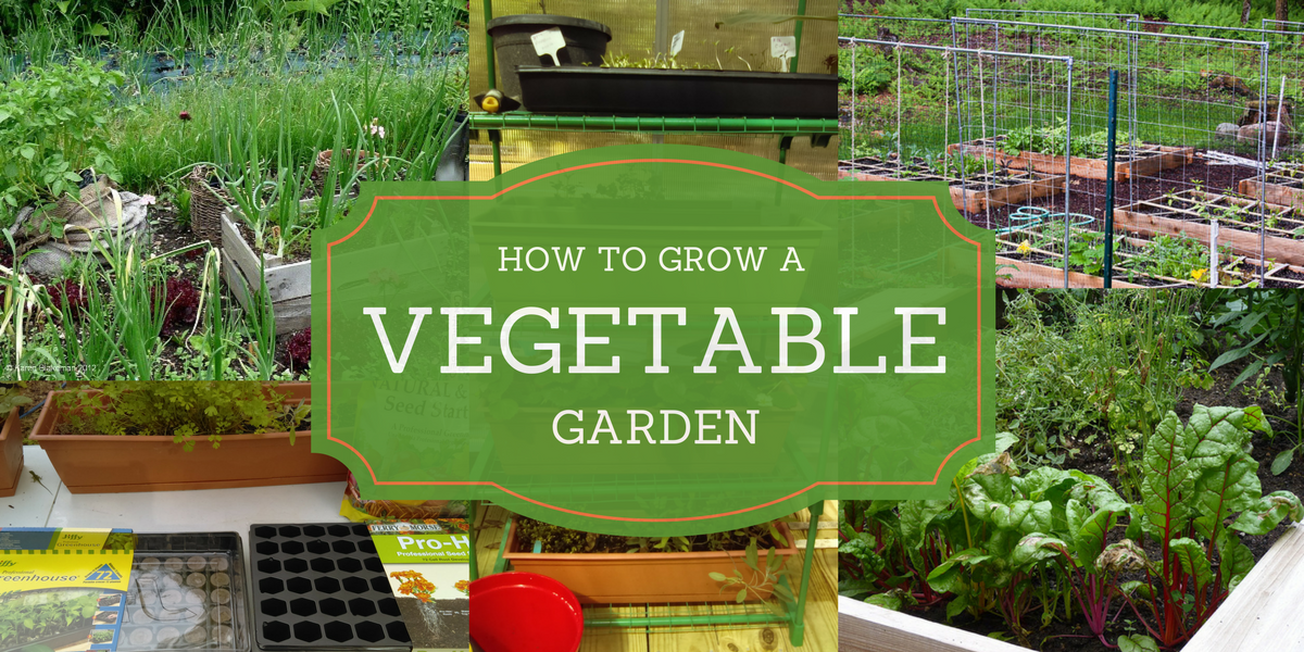 10 Pinteresting People Teach Us How To Grow a Vegetable Garden