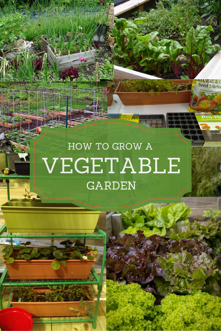 So you want to know how to grow a vegetable garden! It's an exciting thought. There are several ways you can go about it.