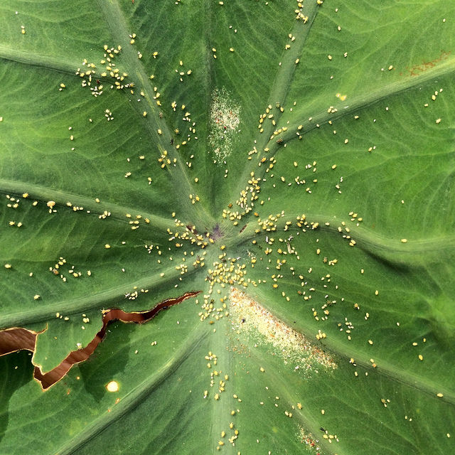 plant leaf turning yellow