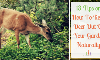 13 Tips on How to Keep Deer Out of the Garden Naturally