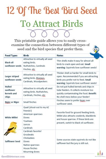 12 of The Best Bird Seed to Attract Birds [Printable]