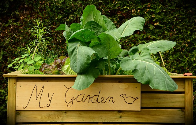 how to make a raised bed for a vegetable garden