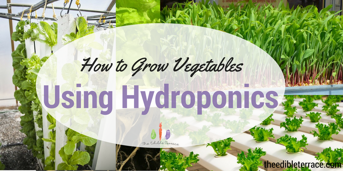 How to Grow Awesome Vegetables: Complete Hydroponic System for Beginners