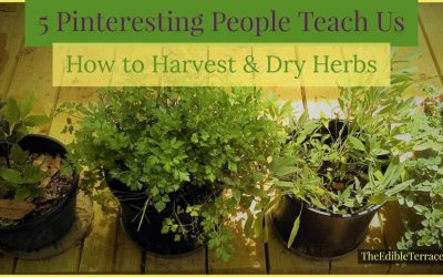 5 Pinteresting People Teach Us How To Harvest and Dry Herbs