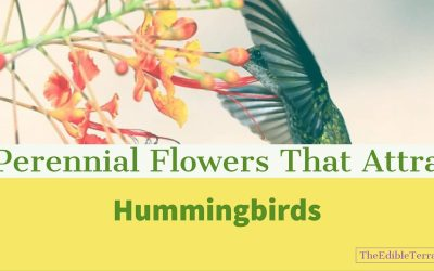Become an Expert on Perennial Flowers that Attract Hummingbirds