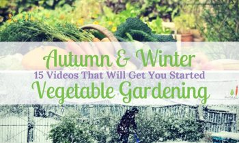 15 Videos That Will Get You Started On Autumn & Winter Vegetable Gardening