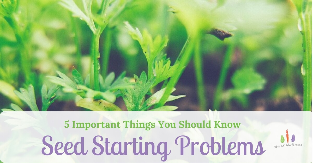 5 Secrets To Fixing Seed Starting Issues In Your Veggie Garden