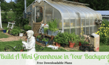 How To Build A Mini Greenhouse In The Backyard (Free Plans)