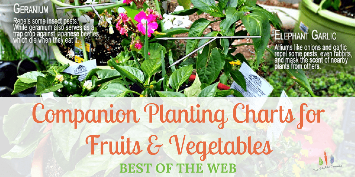 Companion Planting Charts for Vegetables & Fruit – Best of the Web