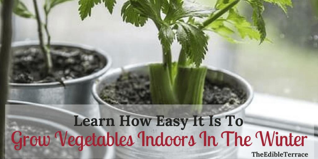Grow Vegetables Indoors In The Winter