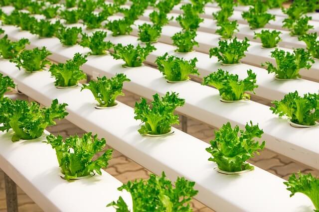 Growing veggies indoors winter