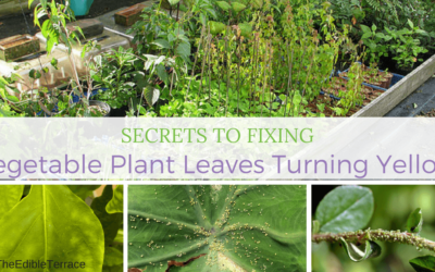 Secrets To Fixing Vegetable Plant Leaves Turning Yellow