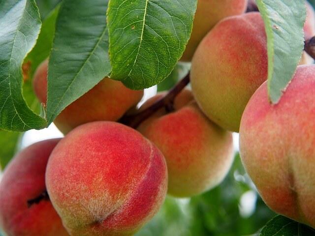 start small orchard