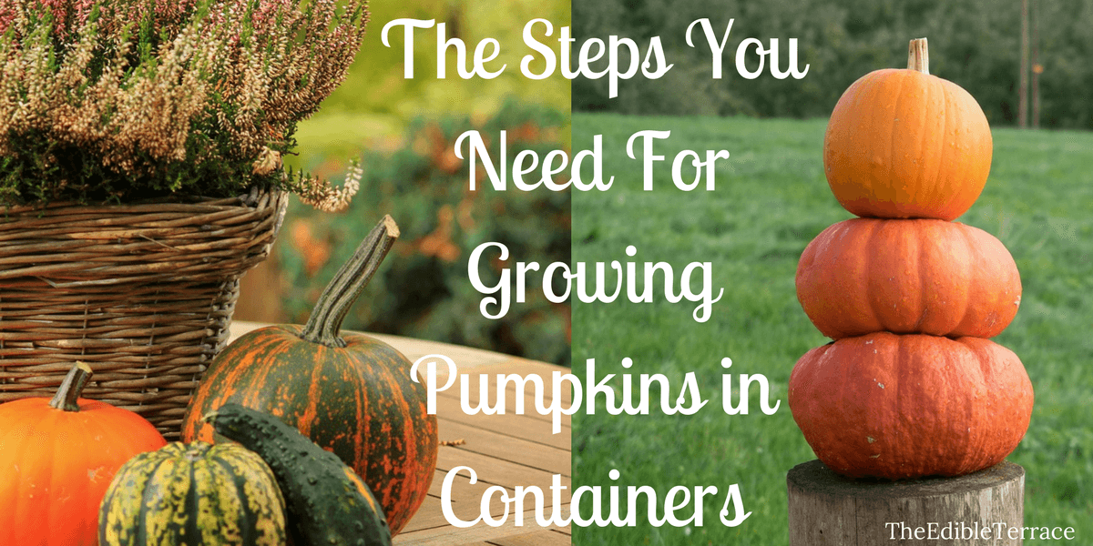 Can You Grow Pumpkins In Containers Yes