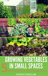 Top gardening tools for elderly the 8 tools you - Growing in small spaces image ...