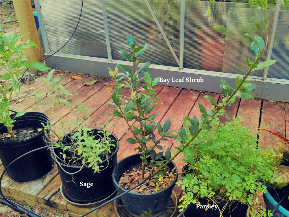 Would You Like To Grow An Herb Garden Indoors Year Round