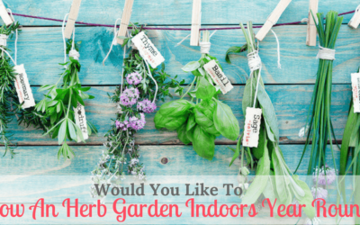 Would You Like To Grow An Herb Garden Indoors Year Round?