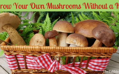 Would You Like To Grow Your Own Mushrooms Without A Kit?