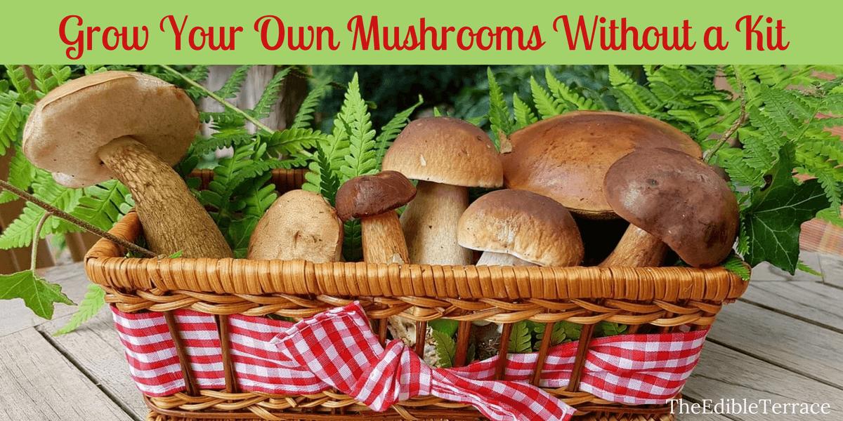 Growing edible mushrooms home