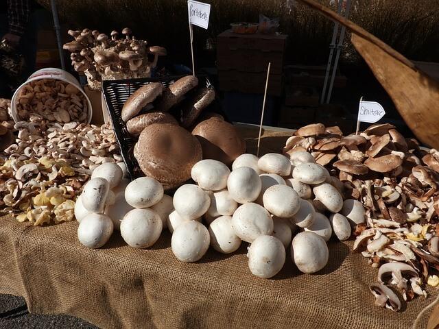 How Do You Grow Mushrooms at Home