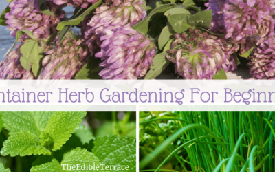 Easy! 11 Steps To Container Herb Gardening For Beginners [Video]