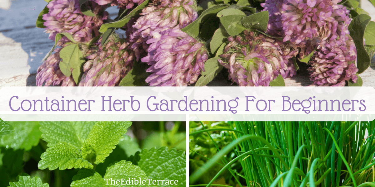 Exceptionnel 11 Steps To Container Herb Gardening For Beginners [Video]