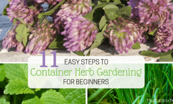 Easy! 11 Steps To Container Herb Gardening For Beginners