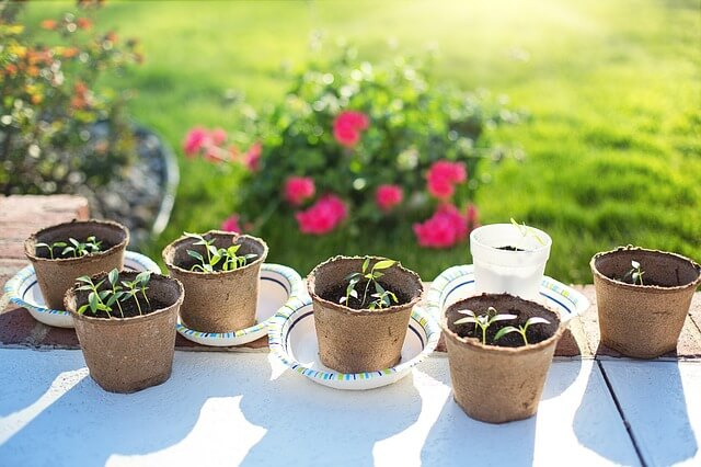 When to Start Tomato Plants Seeds Indoors
