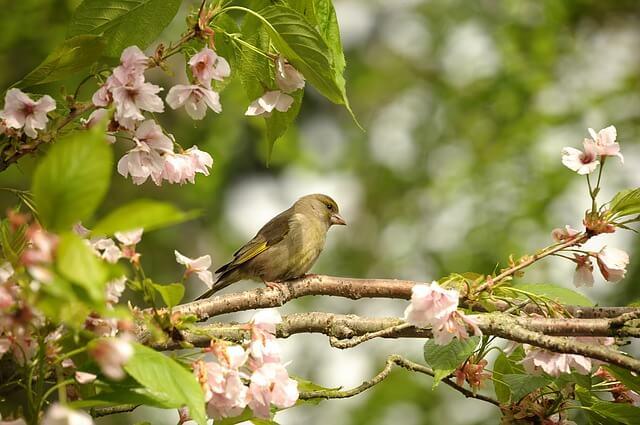 Attract birds to garden