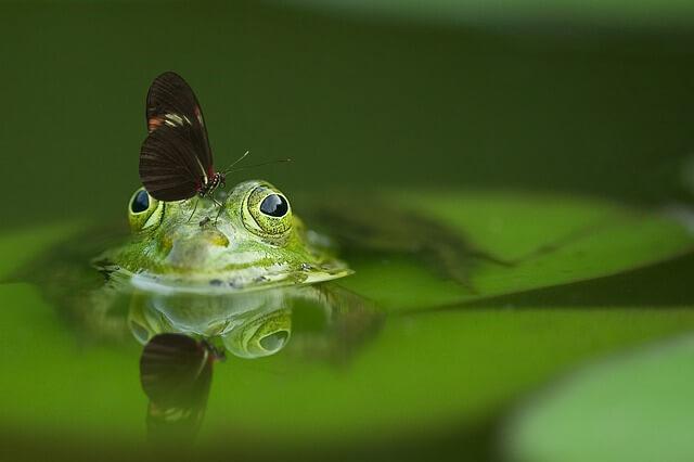 attract butterflies to garden